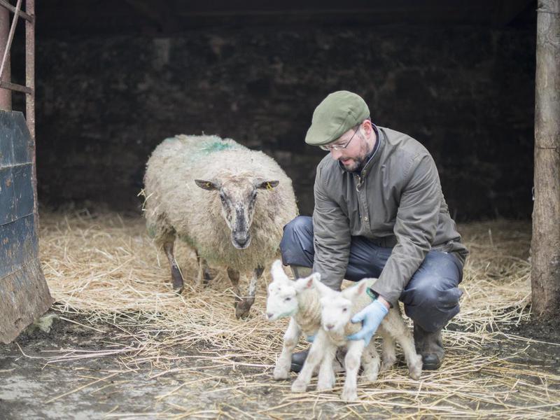 Farmer during lambing season, Galway, Ireland.