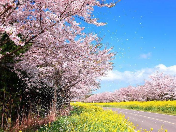 Jeju road in spring