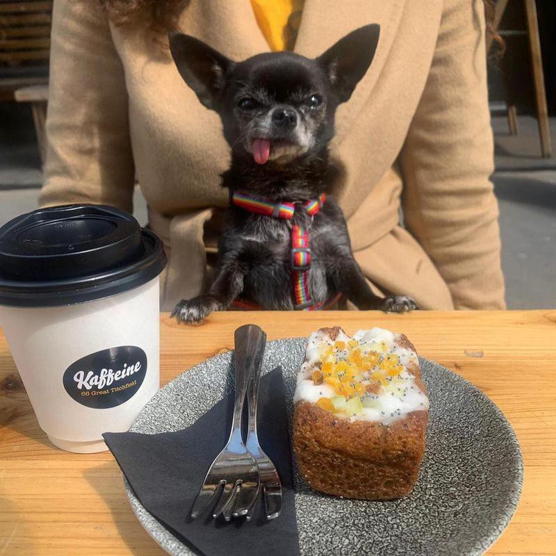 Black chihuahua with dessert