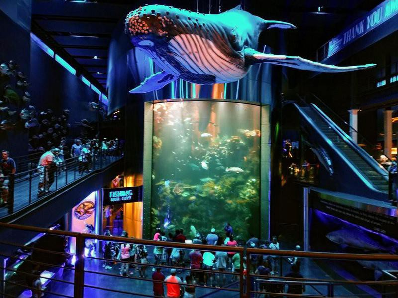 Johnny Morris' Wonders of Wildlife National Museum and Aquarium