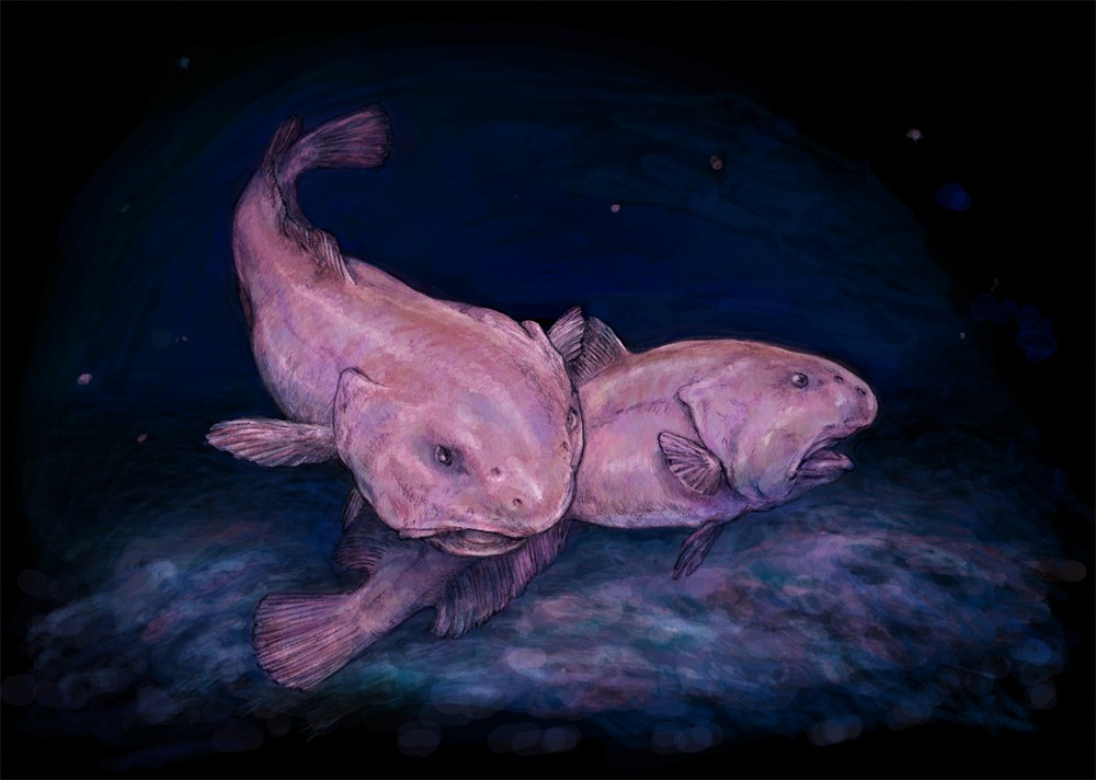 Two Blobfish