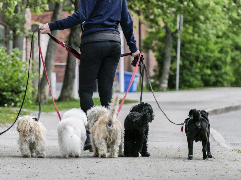 dog walking gig job