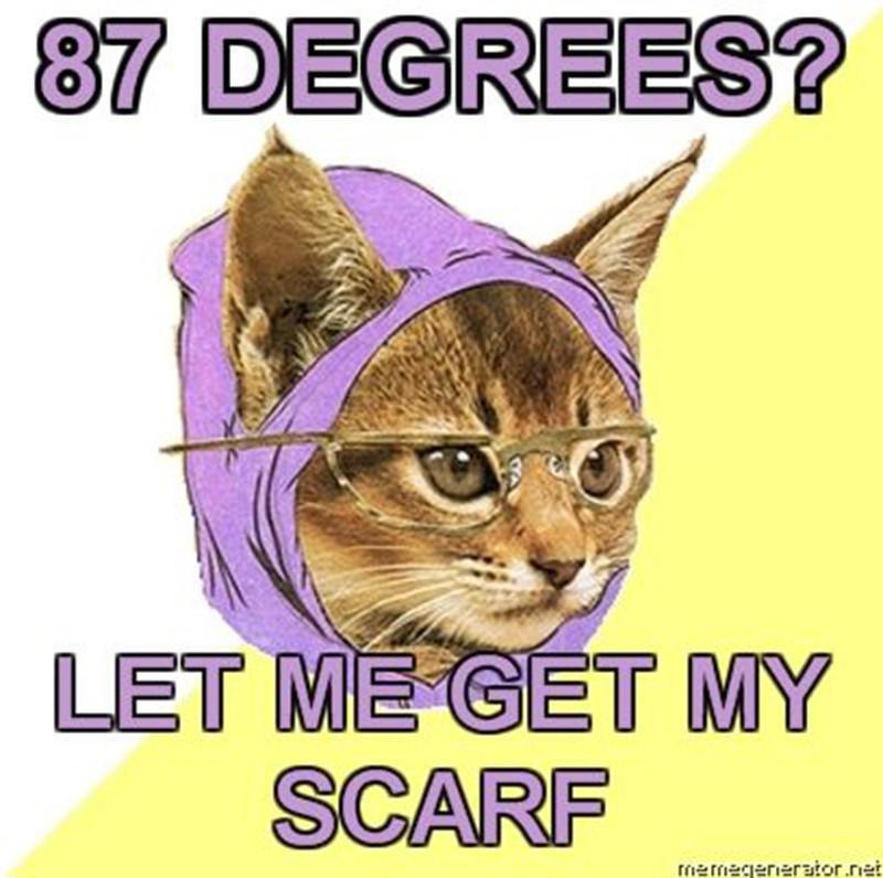 Cat needs a scarf