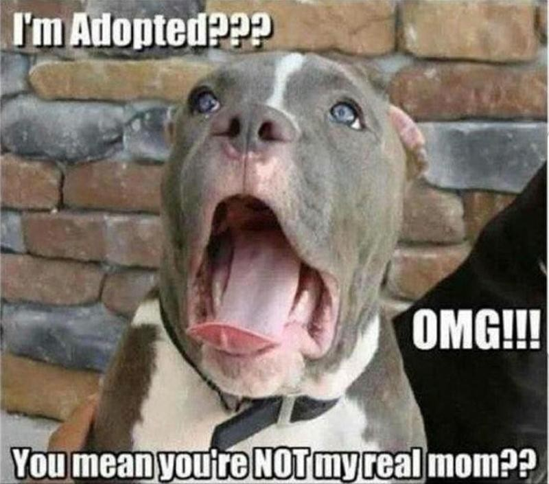 Dog finds out about real mom