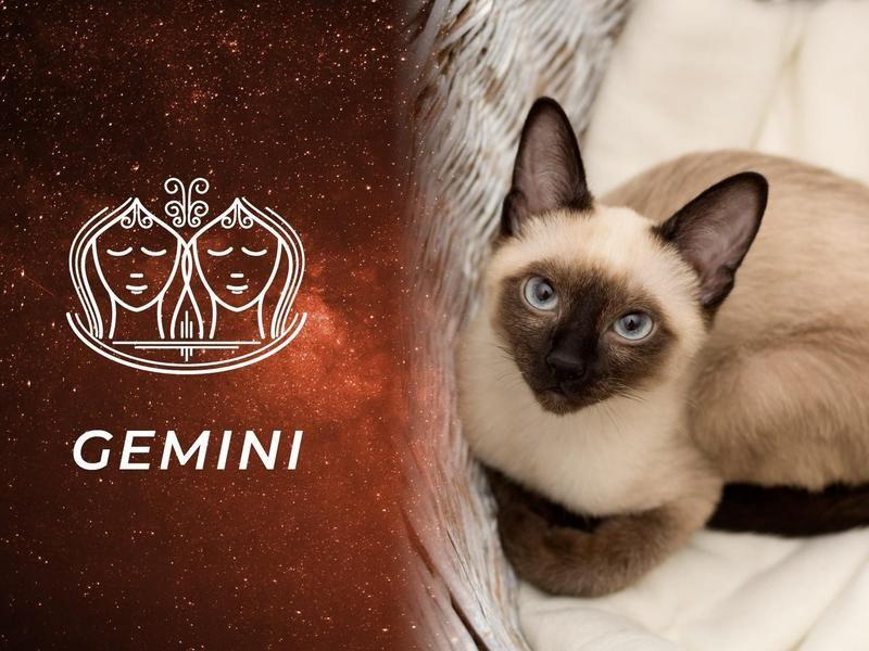 Gemini: Siamese