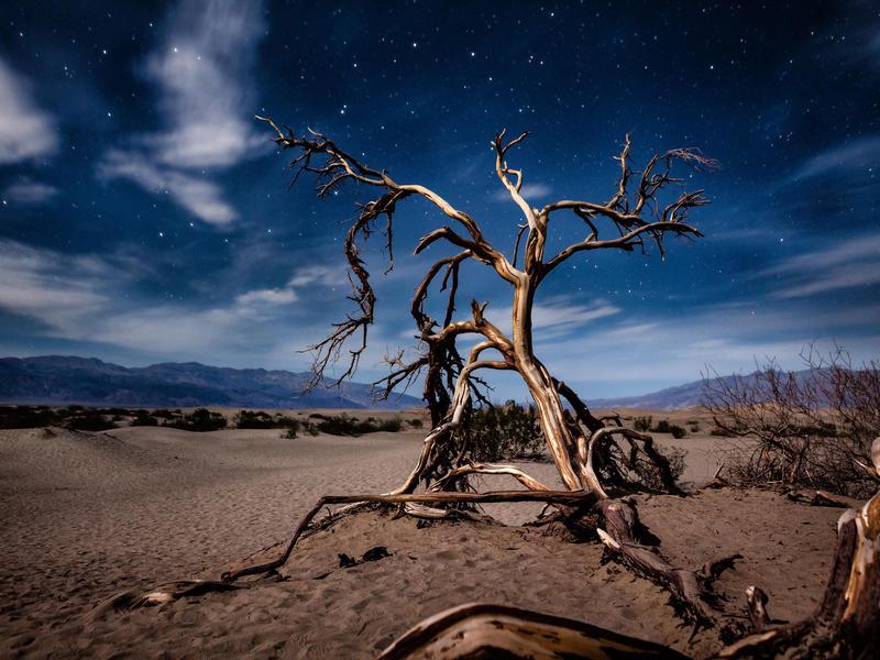 Mesquite Tree At Night