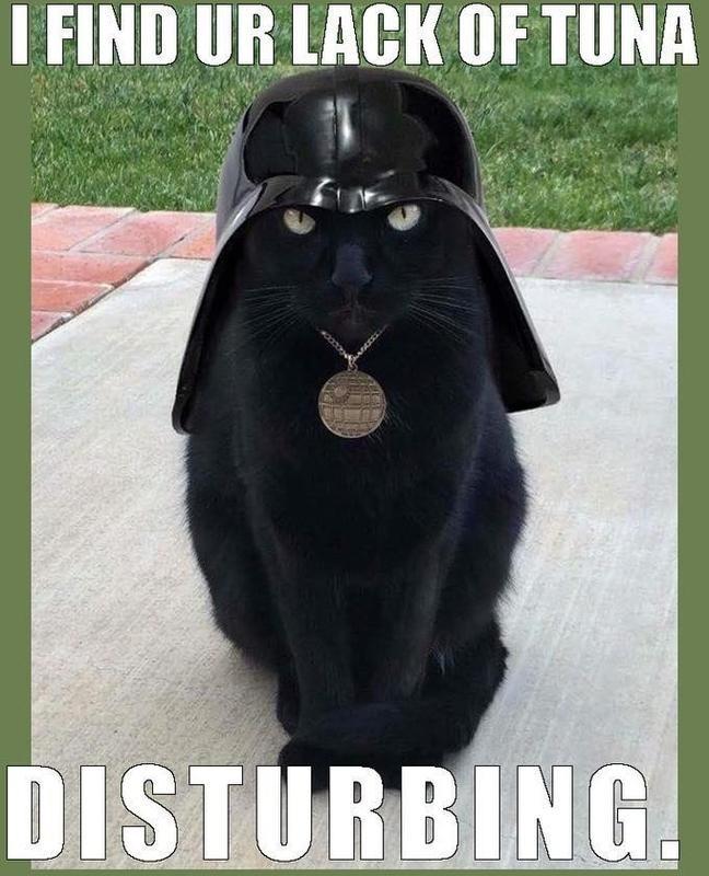 Cat in a Darth Vader helmet