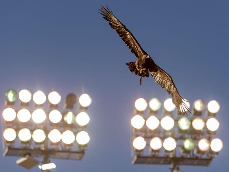 War Eagle VIII