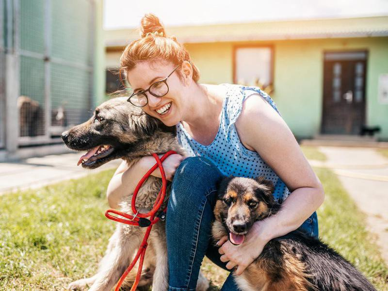 woman working and playing with adorable dogs in animal shelter
