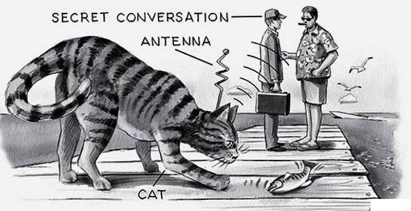 Operation Acoustic Kitty