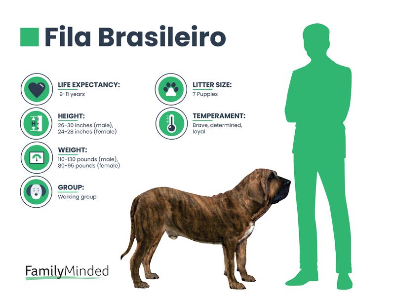 Fila breed
