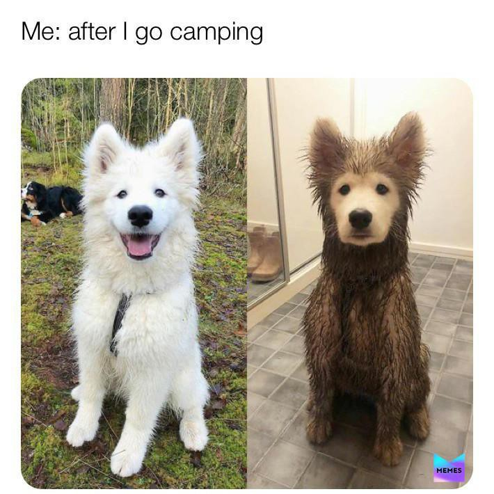 Clean and dirty dogs camping meme