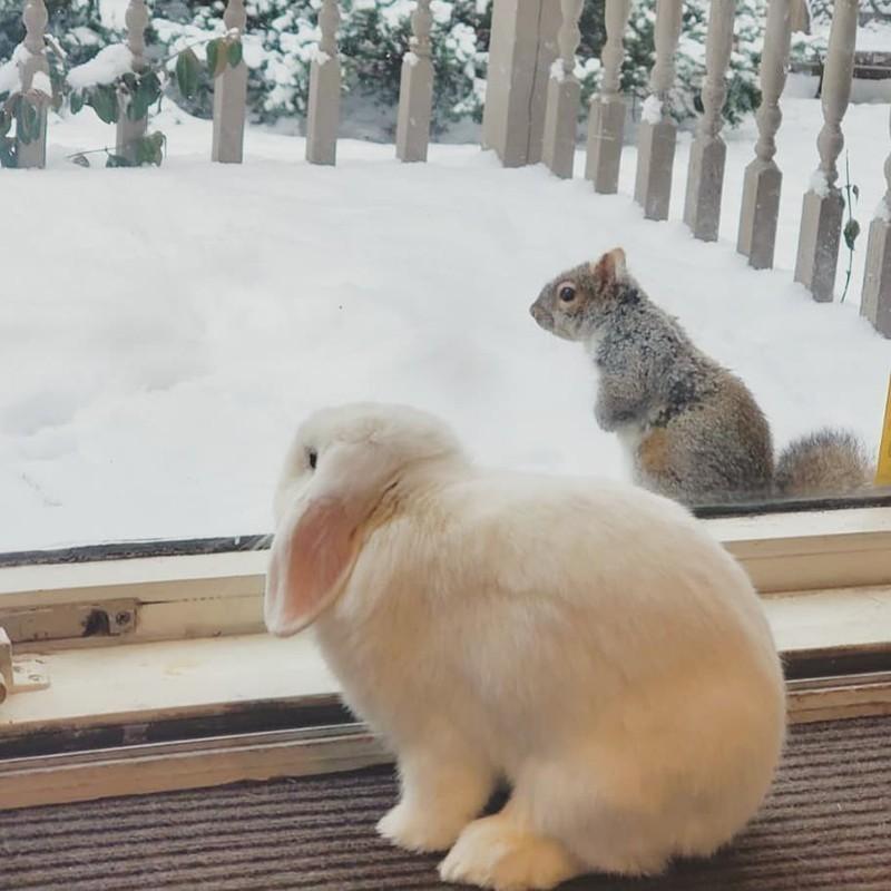 Bunny rabbit and squirrel