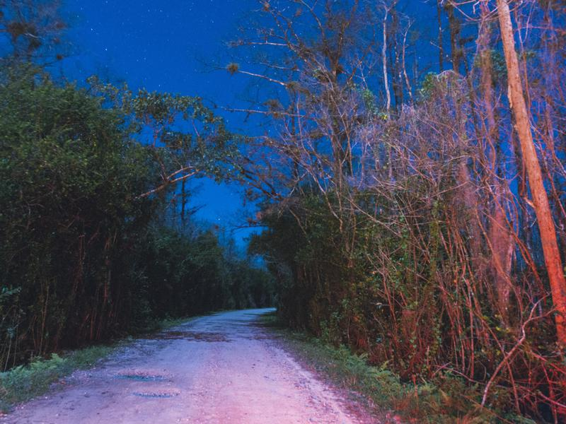 Everglades at Night