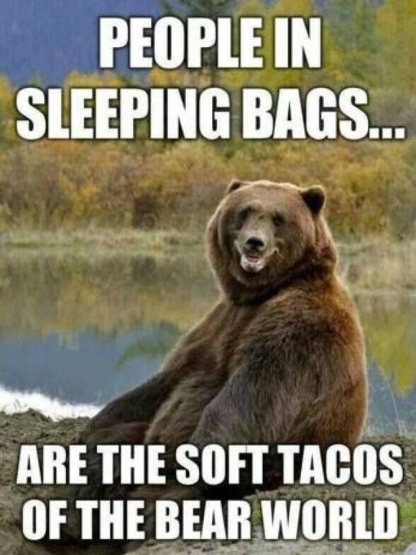 Hungry bear camping meme