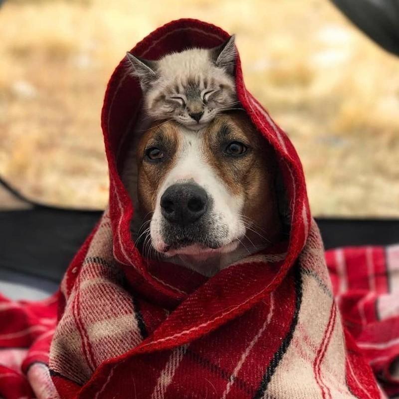 Sleeping cat on dog's head