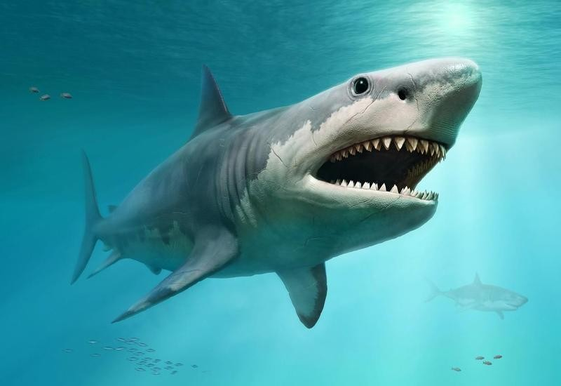 Rendering of a megalodon shark