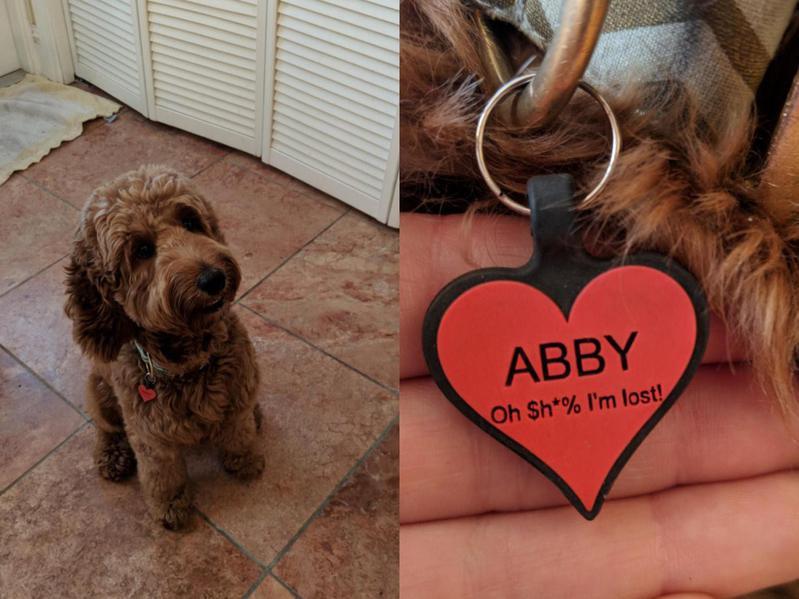 Cute lost dog tag