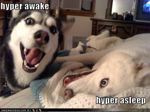 Hyper Huskies