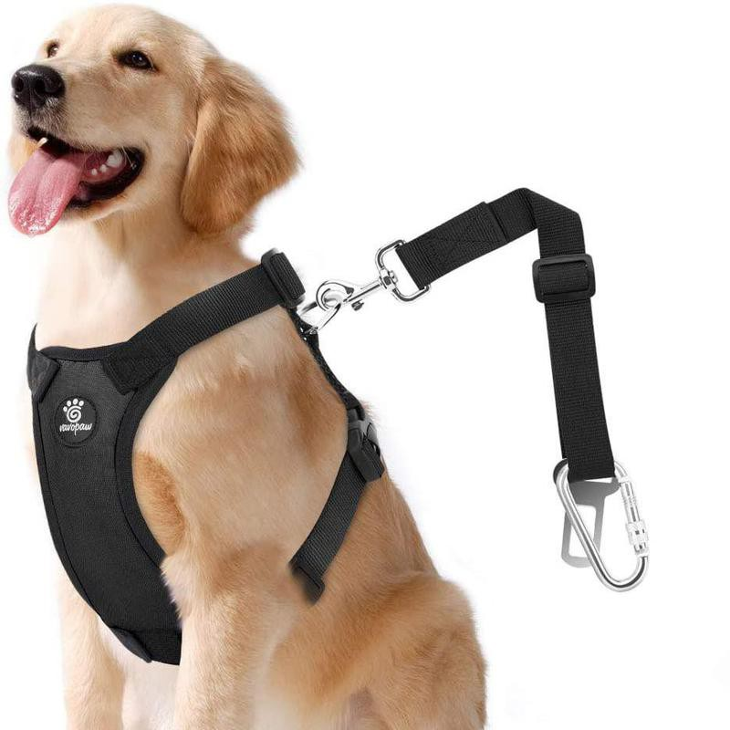 Large dog with black harness and dog seat belt