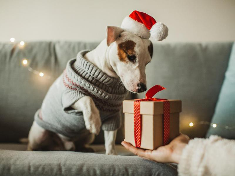 New year present for dog