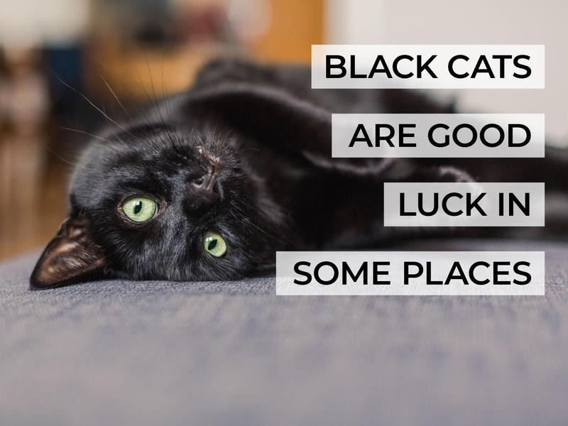 Black Cats Are Good Luck in Some Places