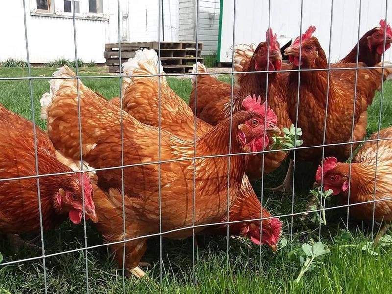 Country Cousins Farm