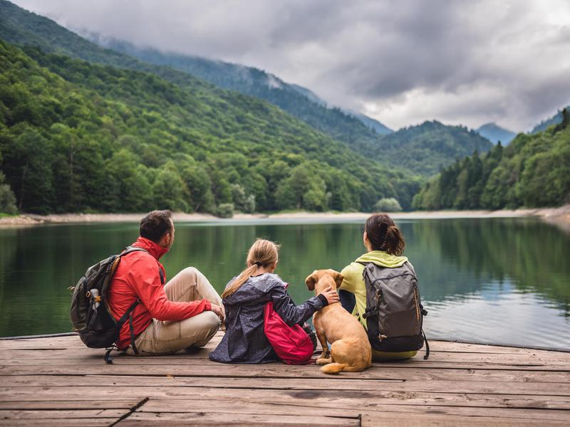 Dog Vacations