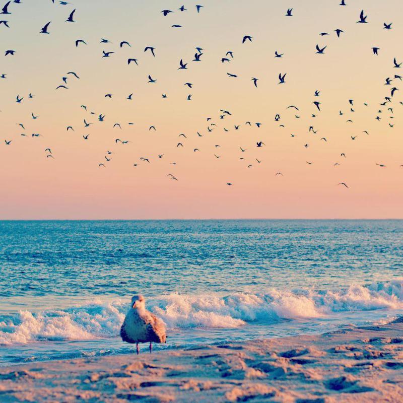 Cape May City Beaches