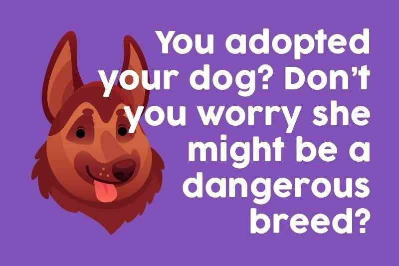 You adopted your dog? Don't you worry she might be a dangerous breed?