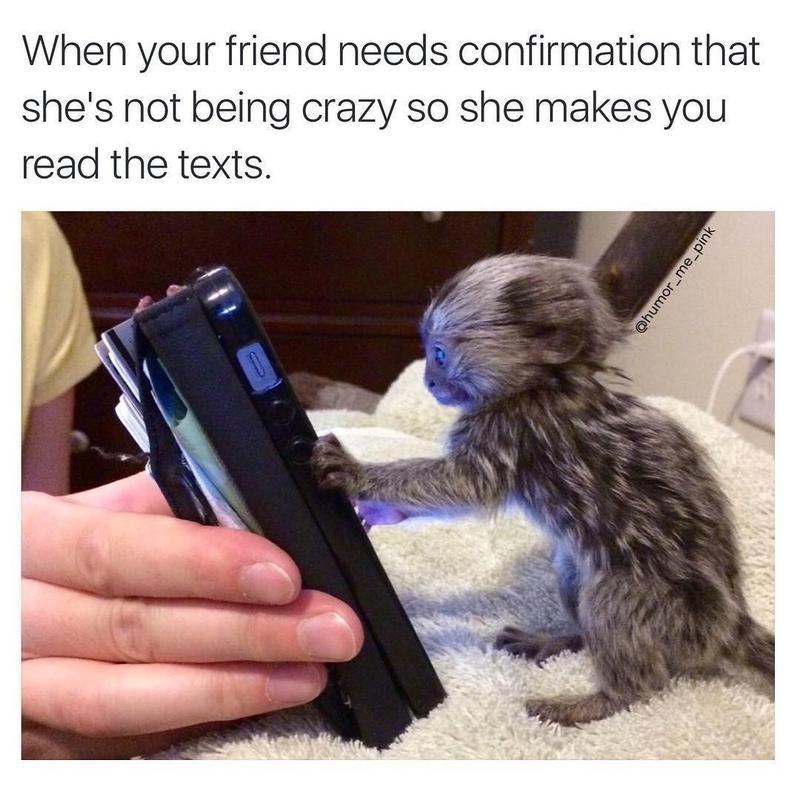 animal on phone