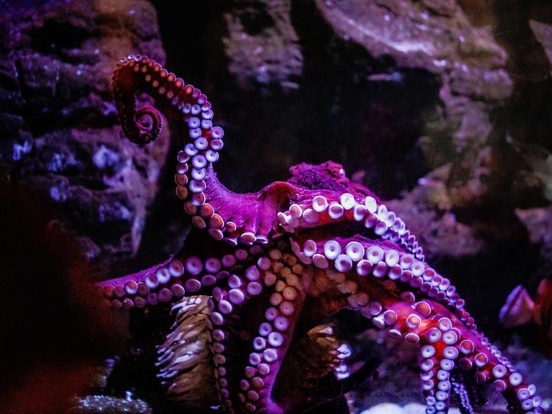 Birch Aquarium at Scripps Institution of Oceanography