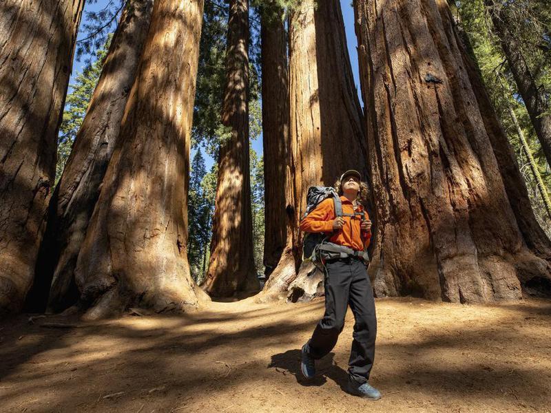 Backpacking in between Sequoias