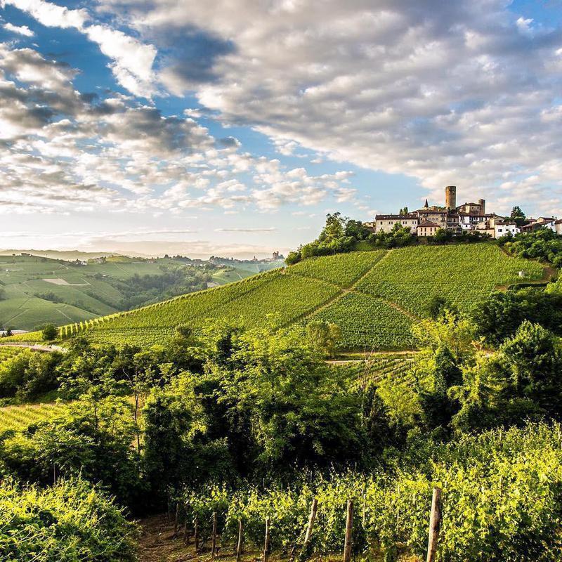 Vietti vineyard