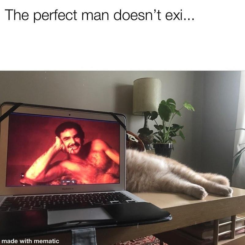 cat behind laptop