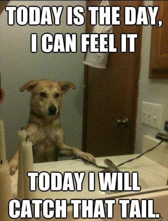 Positive dog affirmations