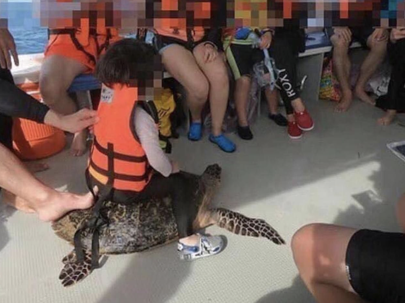 Riding sea turtle