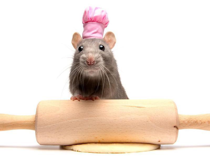 Pet Rat Weird Laws
