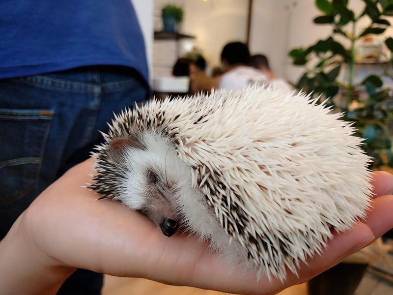 Harry's Hedgehog Cafe