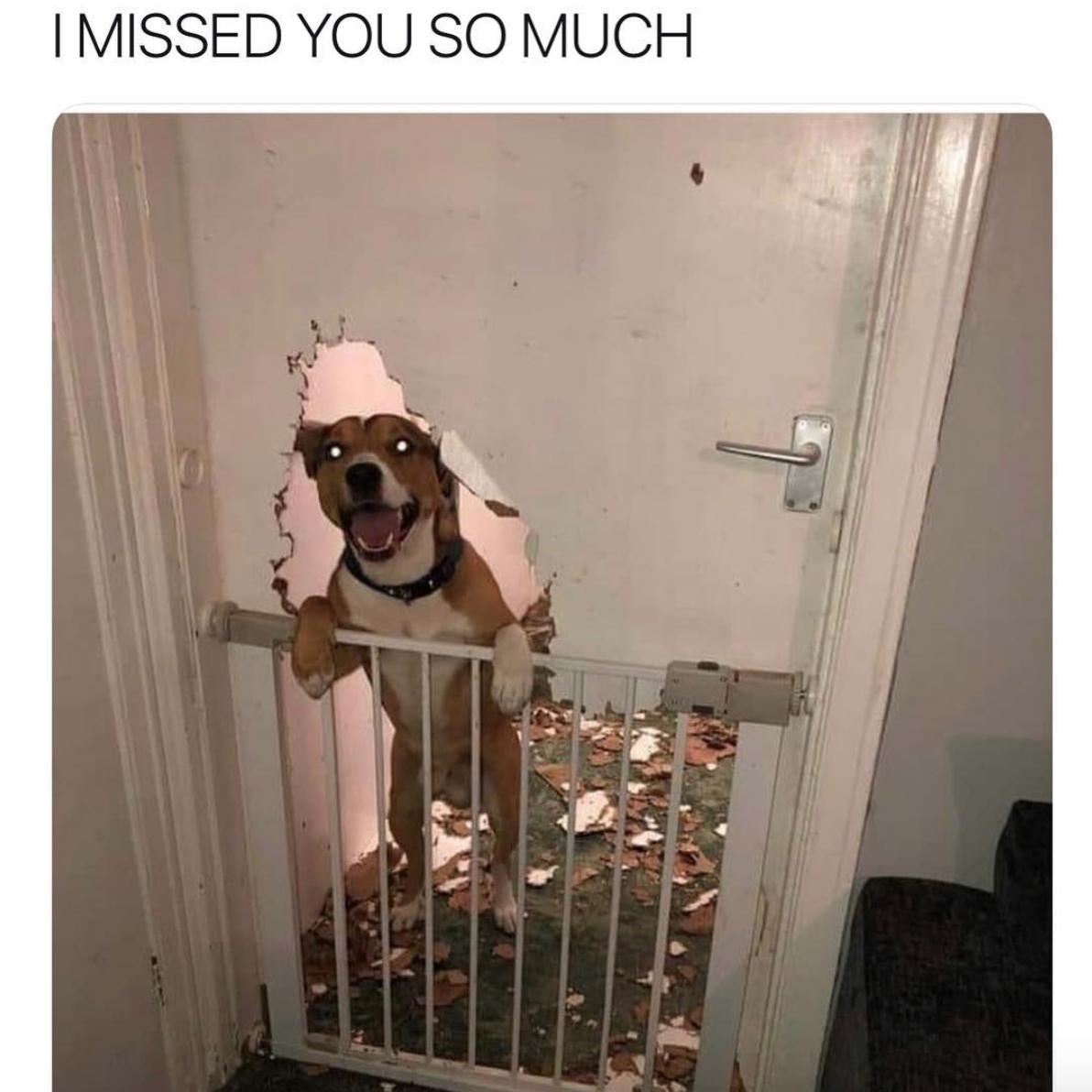 Dog and broken door