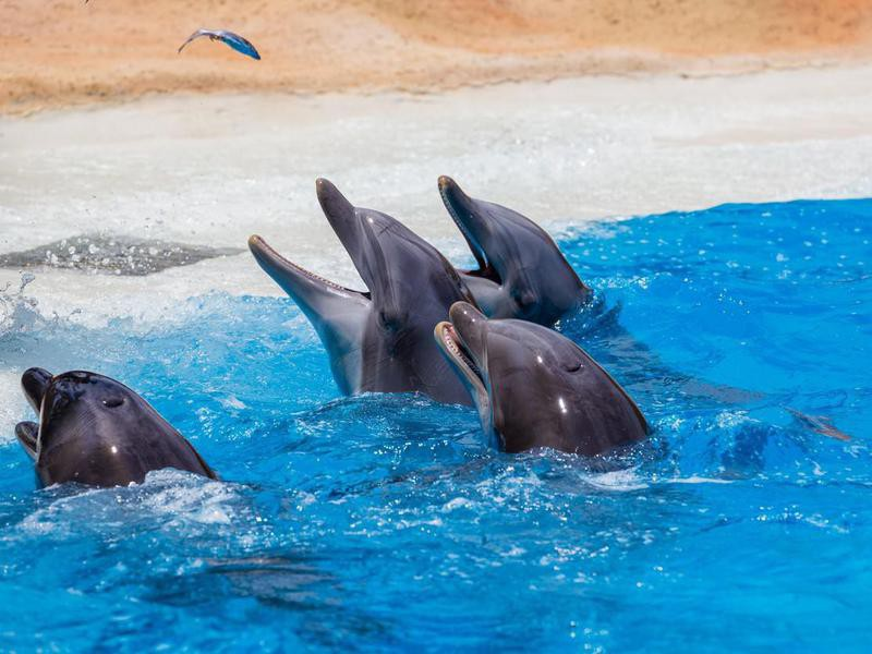 Group of dolphins during feeding