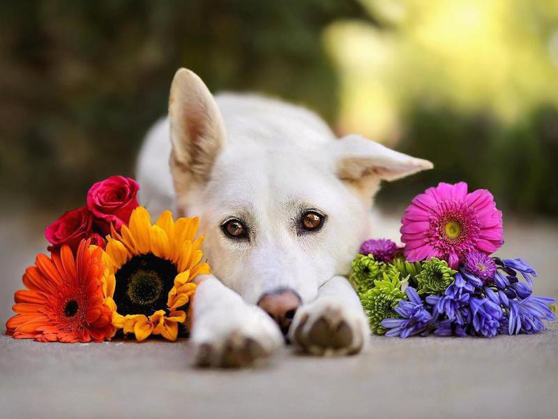 dog posing with flowers