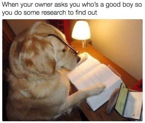 Researching dog