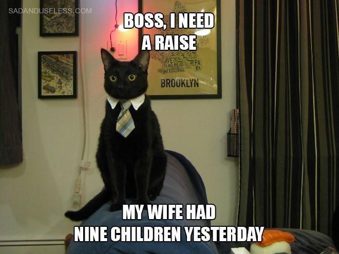 Cat wants a raise
