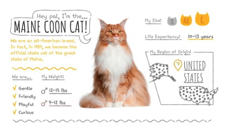 Maine Coon stats