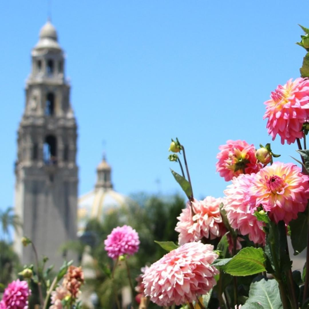 Flowers at Balboa Park