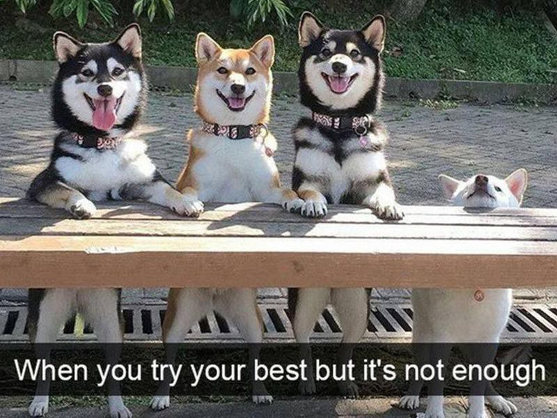 Dogs posing on bench