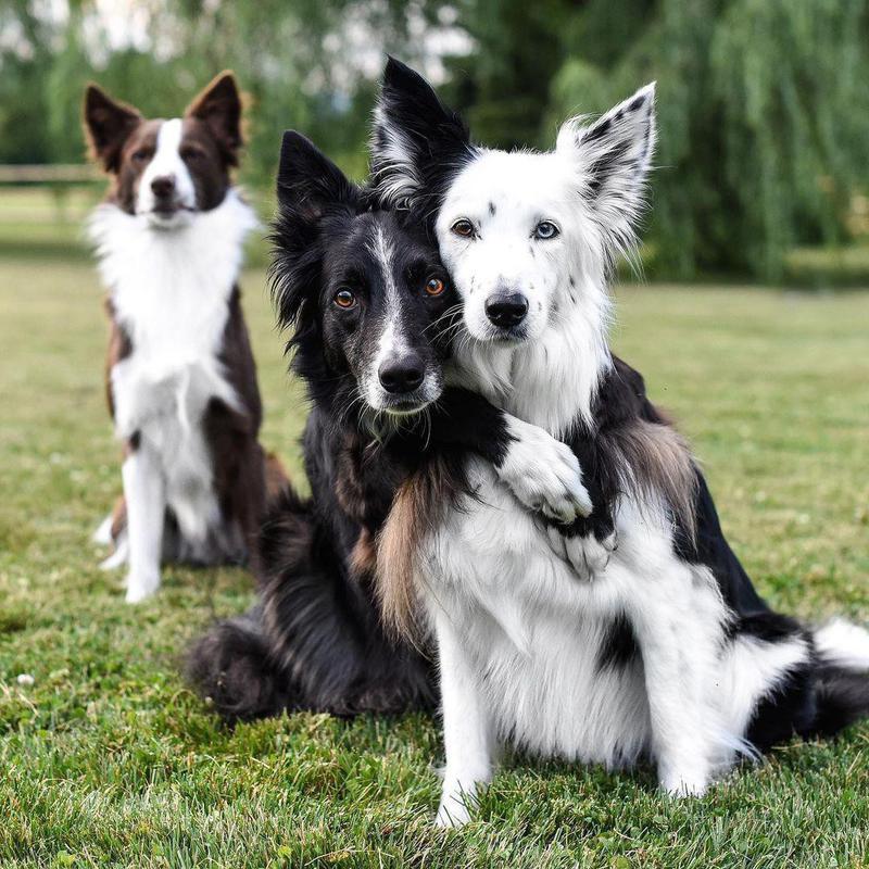 three dog siblings