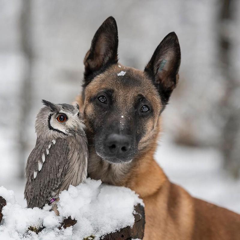 Dog and owl