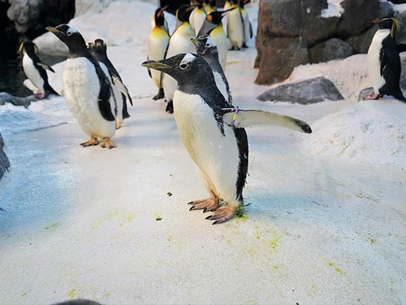 The Oldest-Living Penguin in Captivity
